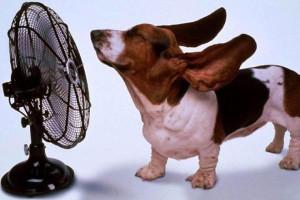 Вентилятор в помощь в жару