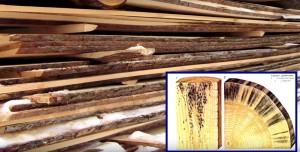 Сушка деревянных досок