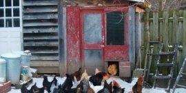Виды и устройство зимней вентиляции в курятнике