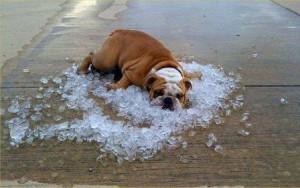 Летняя жара